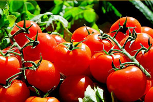 Tomaten; Foto: Coleur: pixabay.com